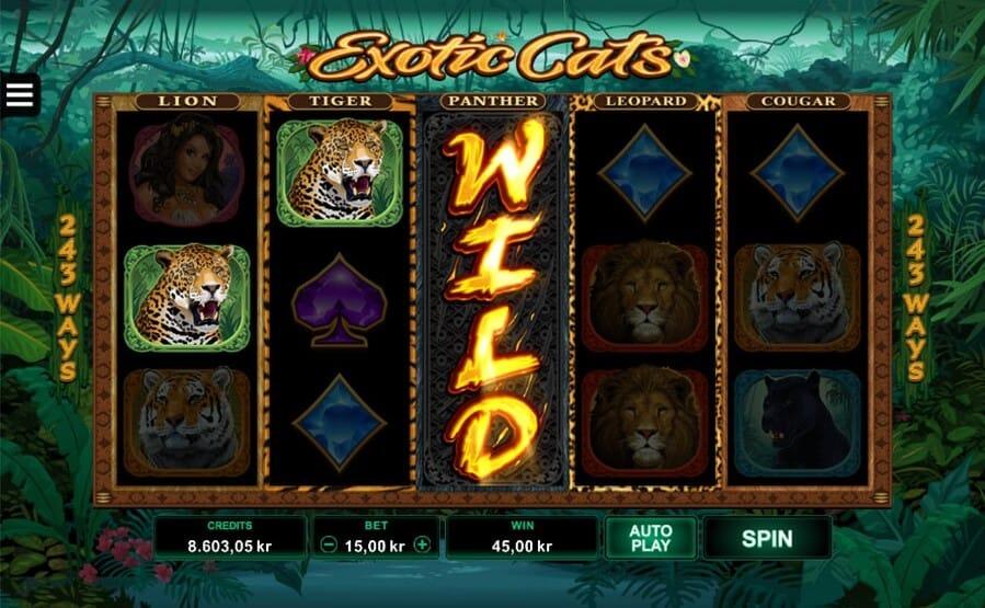 Exotic Cats Slot Bonus