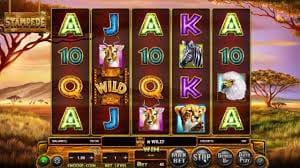 Stampede Jackpot Slot Gameplay